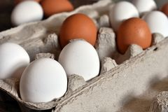 Farm Fresh Organic Eggs. A close up image of farm fresh organic eggs in a paper egg carton on a rustic wooden table royalty free stock photography