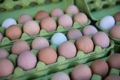 Farm Fresh Organic Eggs. From a variety of different kinds of hens stock images