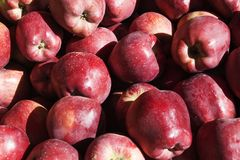 Farm fresh organic red  apples. At the food market Stock Photo