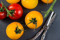 Farm fresh organic tomatoes Stock Photography