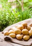 Farm fresh  potatoes on a hessian sack Stock Image