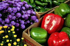 Farm Fresh Produce. Red & green bell peppers & mums Stock Photography
