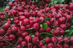 Farm Fresh Radishes. Background of farm fresh radishes Royalty Free Stock Photography