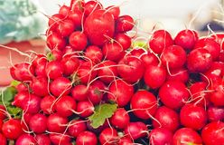 Farm Fresh Radishes on a market Royalty Free Stock Images