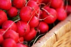 Farm Fresh Radishes. In a market Stock Photos