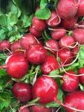 Farm fresh radishes Stock Photo