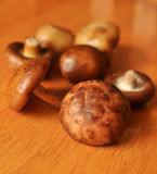 Farm fresh red mushrooms Royalty Free Stock Images