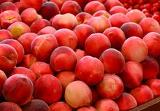 Farm fresh Peaches in market. Farm fresh red peaches plucked from Aussie orchards. in market Stock Image