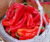 Farm Fresh Red Peppers royalty free stock photo