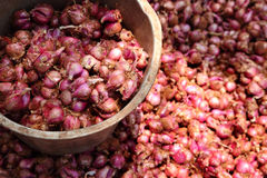 Farm fresh small onions Royalty Free Stock Images