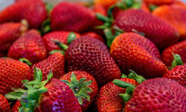 Farm Fresh Strawberries Royalty Free Stock Photos