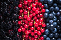 Farm fresh summer berry fruits background Royalty Free Stock Images