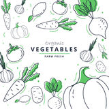 Farm fresh vegetables poster. Sketch style  illustration.Vegetables big set. Farm fresh vegetables poster. Sketch style  illustration. Vegetables big set Royalty Free Stock Image