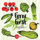 Farm fresh vegetables set Royalty Free Stock Photography