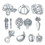 Farm fresh vegetables set. Vector sketch illustration. Autumn farming and harvesting. Farm fresh vegetables set. Vector sketch illustration. Hand drawn isolated royalty free illustration