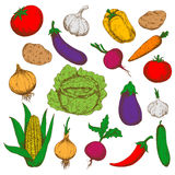 Farm fresh vegetables sketches for farming design Royalty Free Stock Photography