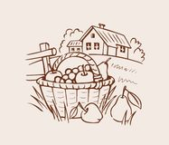 Farm fruit basket on grass Royalty Free Stock Images
