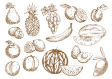 Farm fruits isolated sketches set Royalty Free Stock Photography