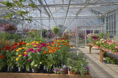 Farm and garden nursery in Canby Oregon. royalty free stock images