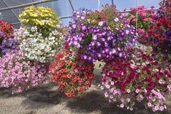 Farm and garden nursery in Canby Oregon. Royalty Free Stock Photos