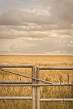 Farm gate. Metal gate in front of a field of barley in Suffolk, UK Stock Images