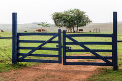 Farm Gate. A wood farm gate painted in blue, a tree and cattle Stock Image