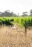 Farm gate Stock Photos