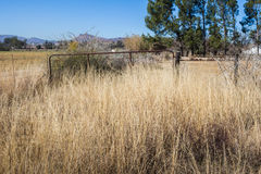 Farm gate to horse enclosure in South Africa. Long grass overgrown farm gate to horse enclosure in South Africa Stock Photography