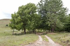 Farm gate and trees Royalty Free Stock Image