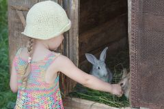 Farm girl feeding domestic rabbits with fresh grass. Outdoors Stock Photo