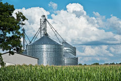 Farm grain bins / silos with cornfield and sky Stock Photo