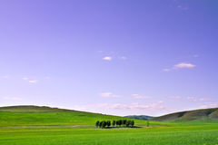 Farm grass plain under blue sky Stock Photo