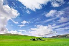 Farm grass plain under blue sky Royalty Free Stock Photo