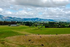Farm in New Zealand with Grazing Cattle stock photos