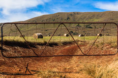 Farm Hay Bales Gate Mountain Stock Photography