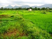 Farm in green countryside Stock Photo