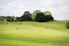 Farm Green Meadow Royalty Free Stock Image