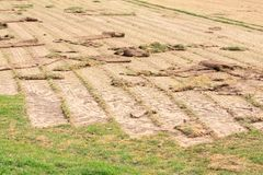 Farm growing  new turf Royalty Free Stock Photography