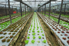Farm growing vegetables indoors Royalty Free Stock Photo
