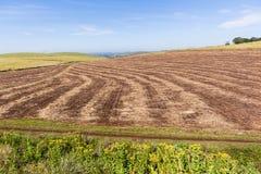 Farm Harvested Landscape Stock Photography