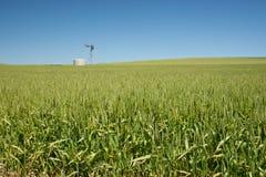 Farm has fields of wheat Royalty Free Stock Photos