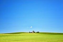 Farm has fields of wheat Stock Image