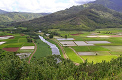 Farm In Hawaii. A farm in a valley in Hawaii, the background is mountains and ridges with a cloudy sky, the foreground is bushes and grass. In the valley is Stock Images