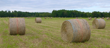 Farm hay bales country field meadow landscape agriculture panorama rural pasture Royalty Free Stock Photography