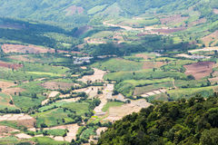 Farm on hills. Aerial view of rice farm on hills countryside in Loei, Thailand Stock Photography