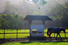 Farm and Horse Royalty Free Stock Photos