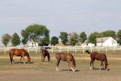 farm horse 库存照片