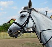 Farm horse Stock Photography