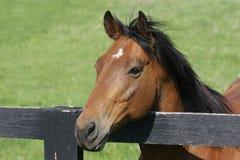 Farm Horse 3. A beautiful horse on the farm royalty free stock photography