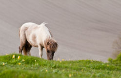 Farm horse in agricultural landscape Stock Image